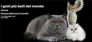 I gatti più belli del mondo - Esposizione internazionale felina